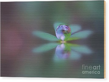 Autumn Clover Droplet Wood Print