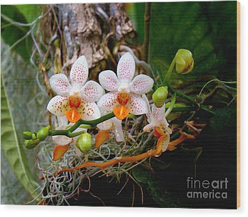 Autumn Colored Orchids Wood Print