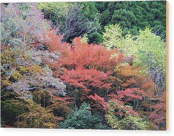 Autumn Colors Wood Print by Demerval Arruda, Jr.