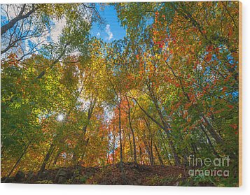 Autumn Colors  Wood Print by Michael Ver Sprill