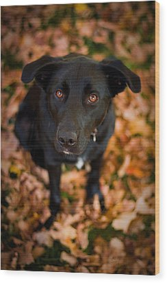 Autumn Dog Wood Print by Adam Romanowicz
