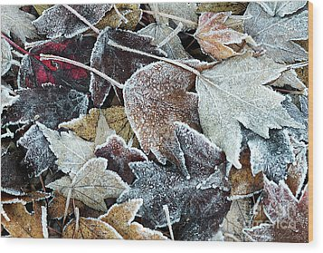 Wood Print featuring the photograph Autumn Ends, Winter Begins 1 by Linda Lees