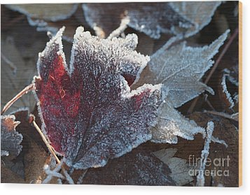 Wood Print featuring the photograph Autumn Ends, Winter Begins 2 by Linda Lees