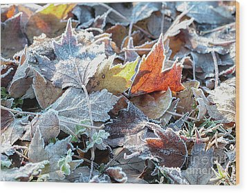 Autumn Ends, Winter Begins 3 Wood Print