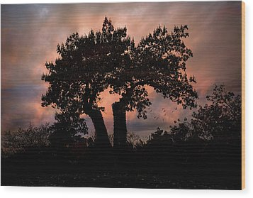 Wood Print featuring the photograph Autumn Evening Sunset Silhouette by Chris Lord
