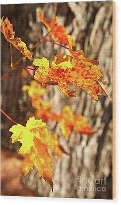 Autumn Fall Color Maple Leaves In The Blue Ridge Wood Print by Dan Carmichael