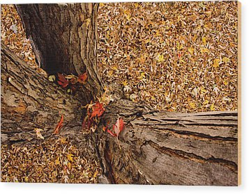 Autumn Fall Wood Print by James BO  Insogna