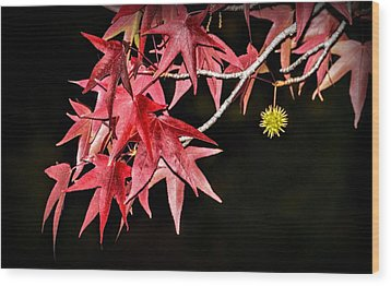 Wood Print featuring the photograph Autumn Fire by AJ Schibig