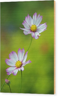 Wood Print featuring the photograph Autumn Flowers by Byron Varvarigos