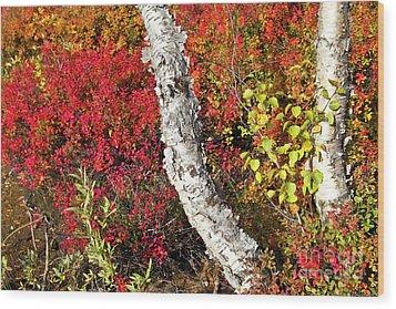 Autumn Foliage In Finland Wood Print by Heiko Koehrer-Wagner