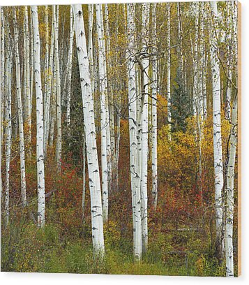 Autumn Forest Beauty Wood Print by Tim Reaves