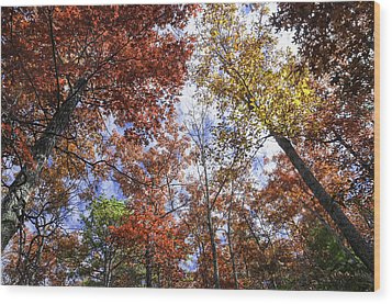 Autumn Forest Canopy Wood Print by Lynn Bauer