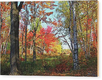 Autumn Forest Wood Print by Debbie Oppermann