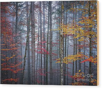 Wood Print featuring the photograph Autumn Forest In Fog by Elena Elisseeva