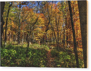 Autumn Forest Path At Johnson's Mound Wood Print
