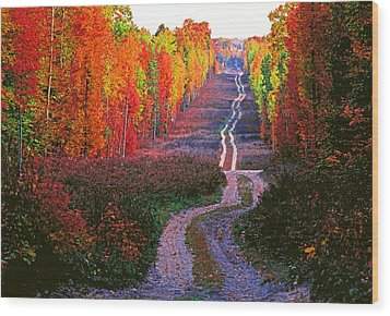 Autumn Forest Track Wood Print by Dennis Cox WorldViews