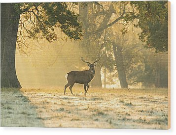 Wood Print featuring the photograph Autumn Frost by Scott Carruthers