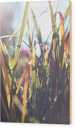 Autumn Grasses Wood Print