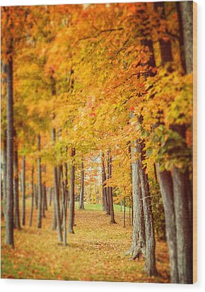 Autumn Grove  Wood Print by Lisa Russo