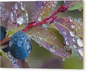 autumn Huckleberry berry and leaves macro in autumn Wood Print by Ed Book