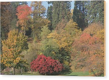 Wood Print featuring the photograph Autumn In Baden Baden by Travel Pics