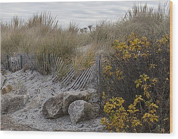 Wood Print featuring the photograph Autumn In The Dunes by Andrew Pacheco