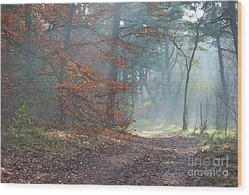 Autumn In The Forest, Painting Like Photograph Wood Print
