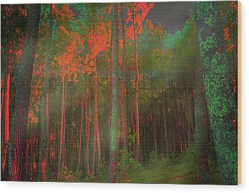 Wood Print featuring the photograph Autumn In The Magic Forest by Mimulux patricia no No