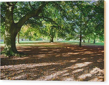 Autumn In The Park Wood Print by Colin Rayner