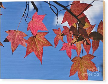 Autumn In The Sky Wood Print by Kaye Menner