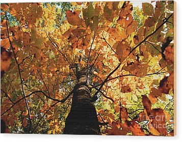 Autumn Is Glorious Wood Print