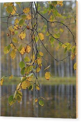 Autumn  Wood Print by Jouko Lehto