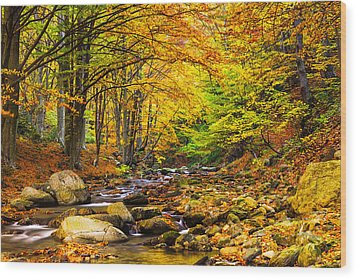 Autumn Landscape Wood Print by Evgeni Dinev