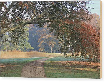 Autumn Landscape With Colored Trees In Park, Netherlands Wood Print