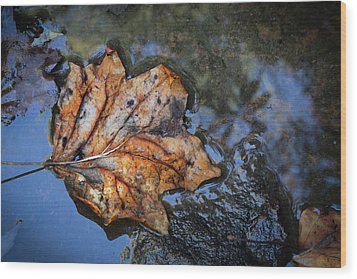 Wood Print featuring the photograph Autumn Leaf by Debra and Dave Vanderlaan