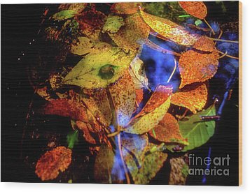 Wood Print featuring the photograph Autumn Leaf by Tatsuya Atarashi