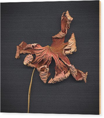 Wood Print featuring the photograph Autumn Leaf by Vladimir Kholostykh