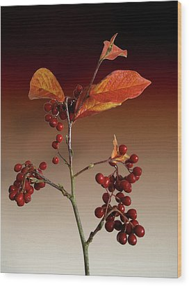 Wood Print featuring the photograph Autumn Leafs And Red Berries by David French