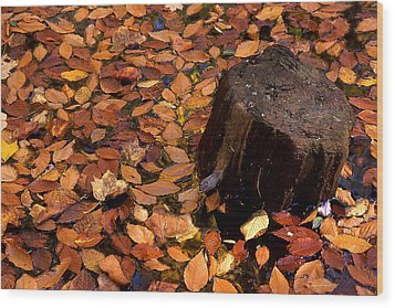 Autumn Leaves And Tree Stump Wood Print by Barry Shaffer