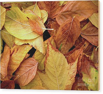 Autumn Leaves Wood Print by Carlos Caetano