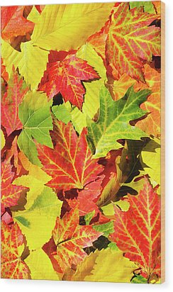 Wood Print featuring the photograph Autumn Leaves by Christina Rollo