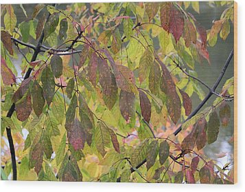 Wood Print featuring the photograph Autumn Leaves by Doris Potter