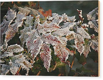 Autumn Leaves In A Frozen Winter World Wood Print by Christine Till