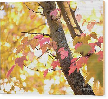 Wood Print featuring the photograph Autumn Leaves by Ivy Ho