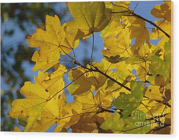 Wood Print featuring the photograph Autumn Leaves by Jean Bernard Roussilhe