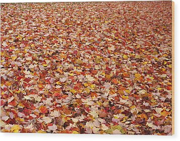 Autumn Leaves Wood Print by Marilyn Wilson