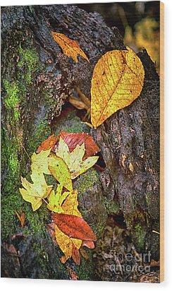 Autumn Leaves On Mossy Tree Trunk Wood Print by Dan Carmichael