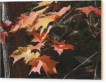 Autumn Leaves Wood Print by Ron Read