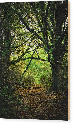 Wood Print featuring the photograph Autumn Light by David Patterson