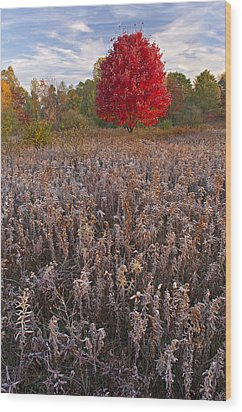 Autumn Maple In Frosted Meadow Wood Print by Dean Pennala